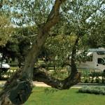 Staannplaatsen camping Polari Rovinj