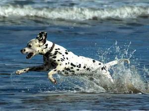 honden in kroatie