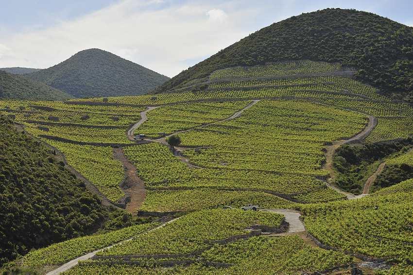 Wijngaarden Kroatie