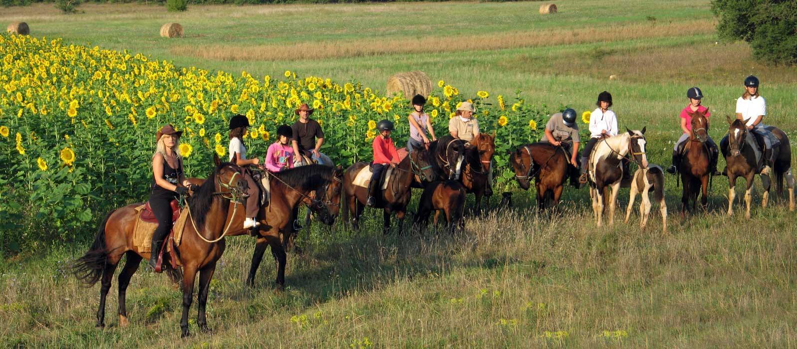 Paardrijden in Istrie