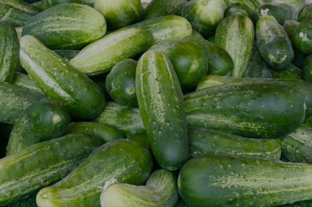 Biologische komkommer