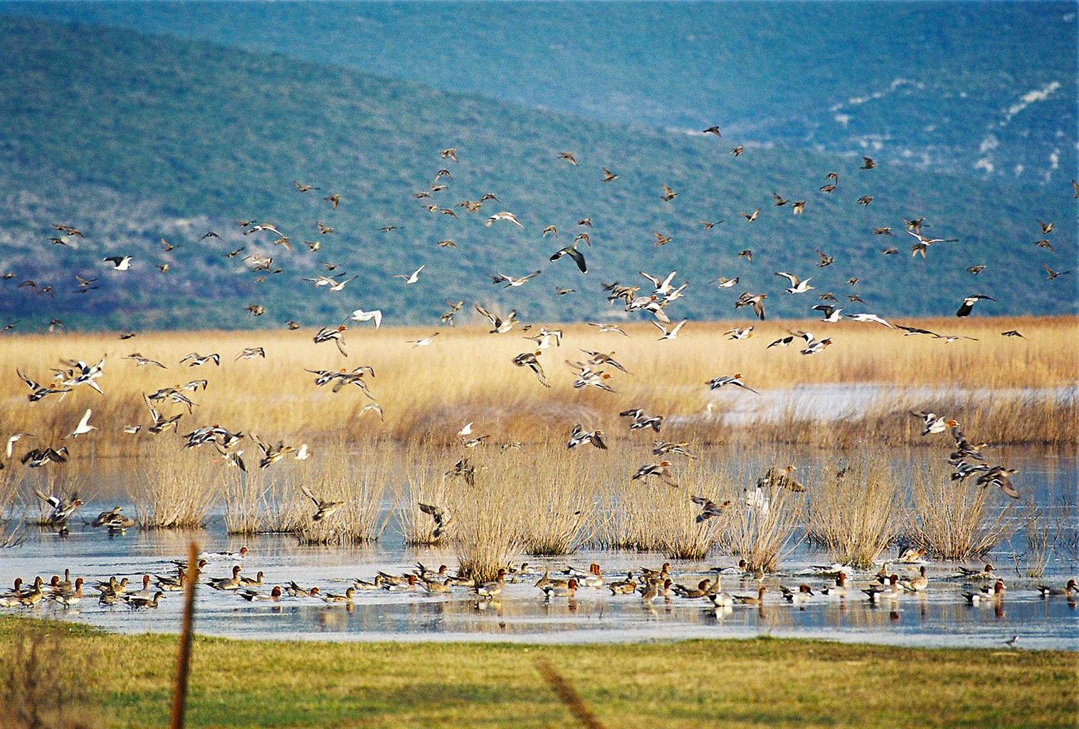 Natuurpark het Vranameer