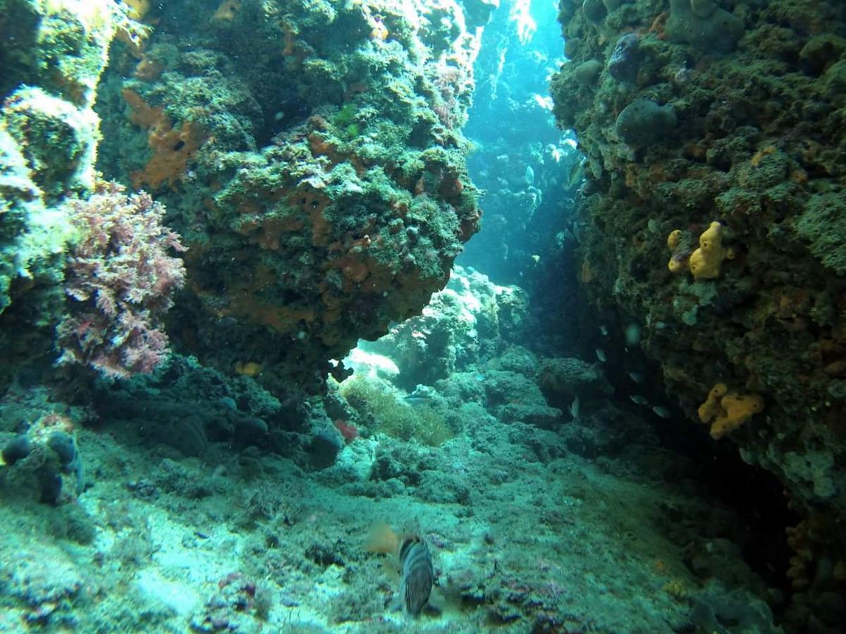 Snorkelen in de Adriatische Zee Kroatie