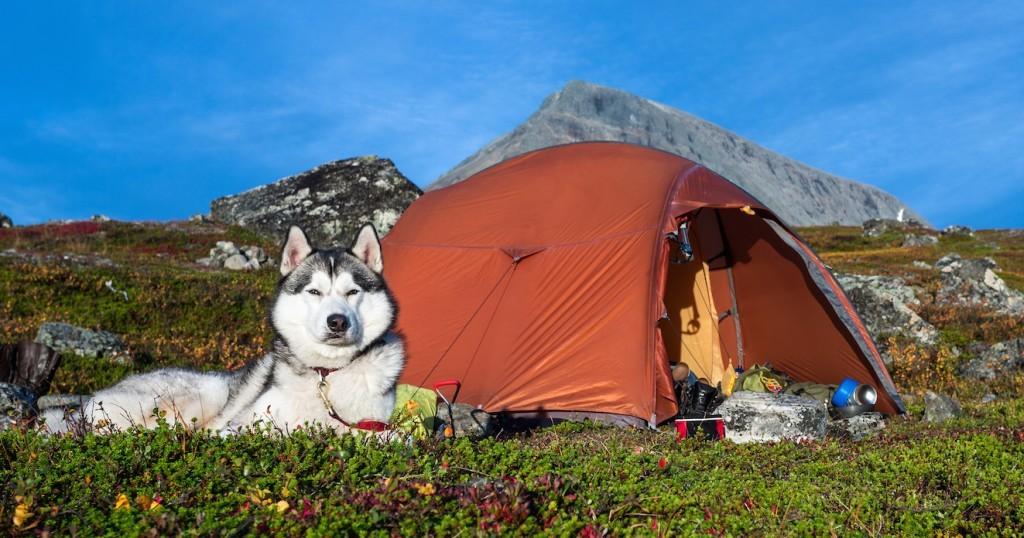 Hond mee op vakantie naar Kroatie
